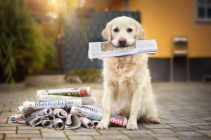Hund hlt Zeitung im Maul